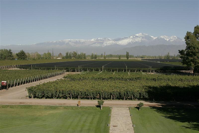 Vinhedos nas proximidades da Cordilheira dos Andes, plantados em altitudes elevadas, se beneficiam da elevada amplitude térmica da região