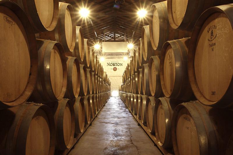 Barricas de carvalho francês das melhores tonelerias proporcionam a exata moldura para os vinhos da Norton