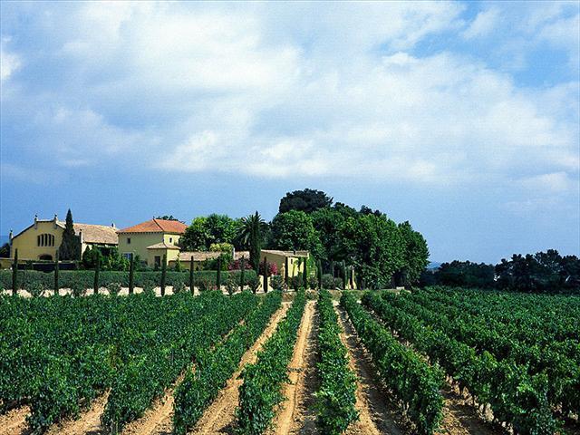 Os lendários vinhedos da Torres, origem das uvas do Mas La Plana, um Cabernet Sauvignon em pureza