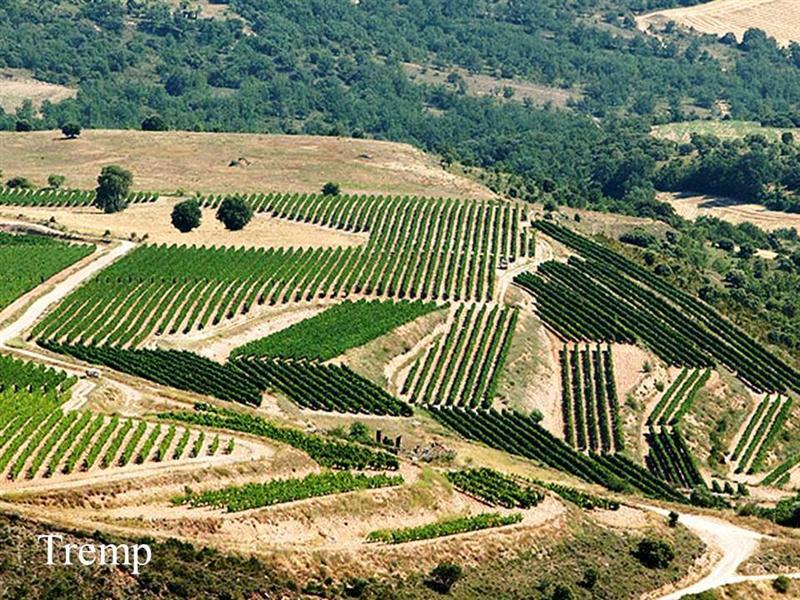 Vinhedo Tremp, plantado em altitude elevada, um dos trunfos da Torres