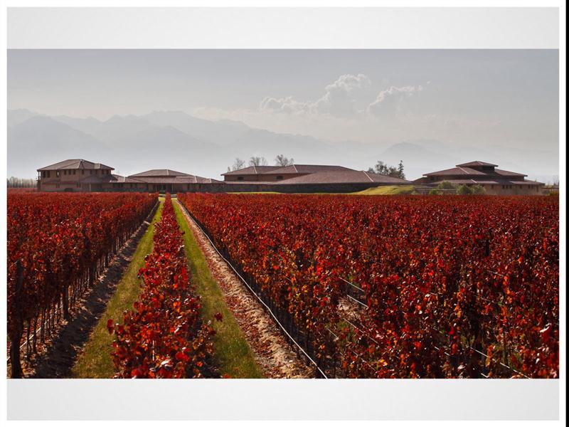 Viñedo Remolinos, origem das uvas dos excelentes vinhos da Decero