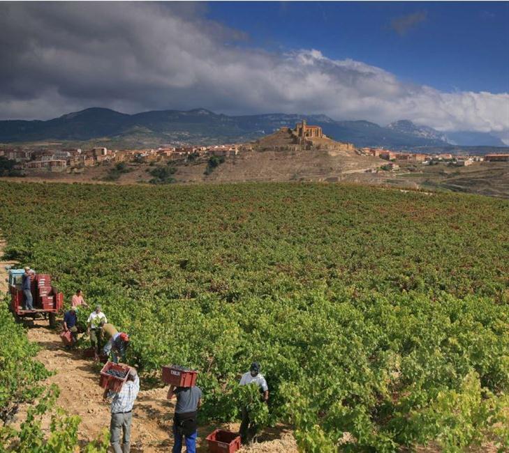 Na magnífica paisagem da Rioja Alta, Tobelos é um marco de qualidade e sofisticação