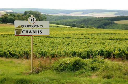 Chablis, berço dos vinhos brancos da Borgonha mais associados à ideia de mineralidade
