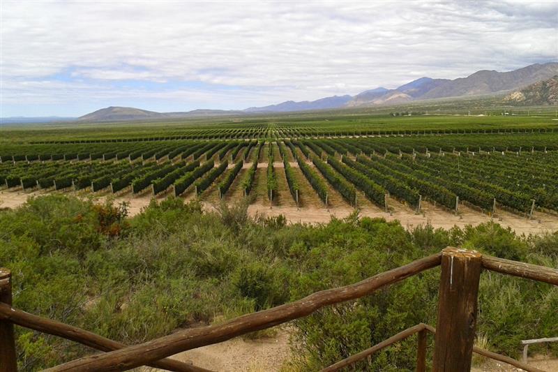 Os Malbecs de Altamira são perfumados, com violeta, lavanda e frutas vermelhas, posicionados entre os melhores da Argentina