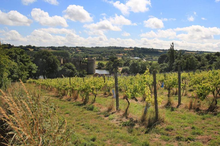 Sedlescombe Vineyards, o primeiro vinhedo orgânico, e agora biodinâmico da Inglaterra, com o Castelo de Bodiam ao fundo, em Sussex