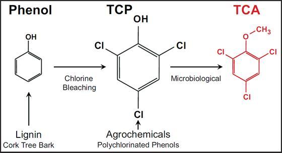 Mecanismo de produção do Tricloroanisol, o mais temido contaminante de rolhas, Cuidado, ele pode arruinar seu vinho...