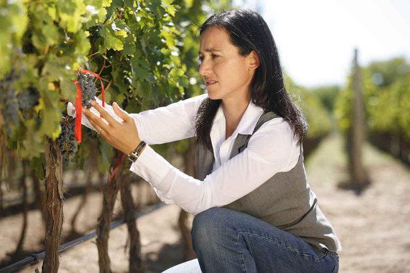 Laura Catena, cuidando das uvas como se fossem as flores de seu jardim...