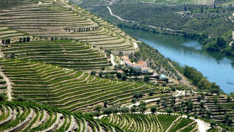 Vinhedos e Hotel da Quinta da Romaneira - paisagens de sonho em meio as vinhedos