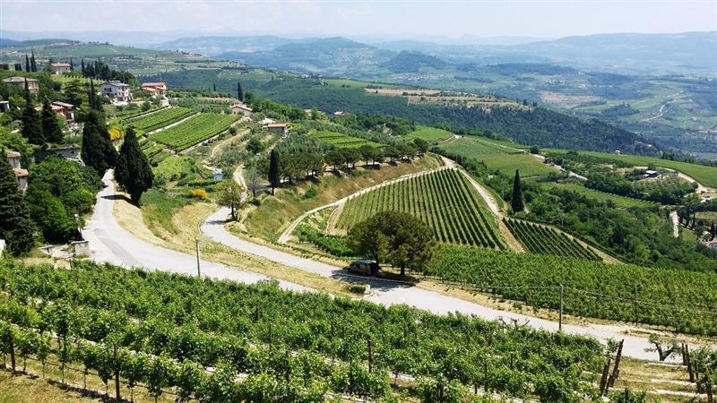 Vista dos espetaculares vinhedos da Allegrini, no Veneto